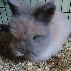 Familia de conejos: Aisha