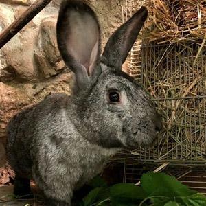Familia de conejos: Quimet