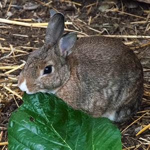 Familia conejos - Rufo