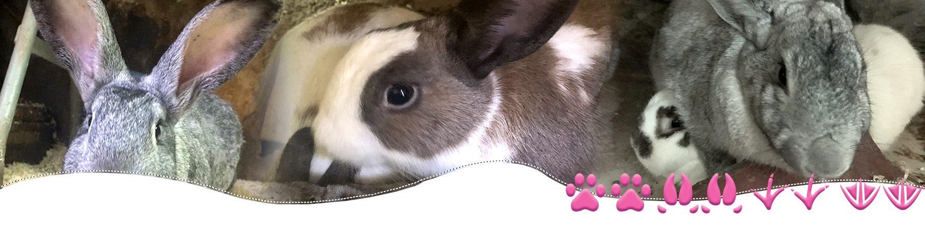 Familia Conejos del Santuario BuenaVida